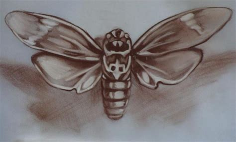 locust tattoo sepia study by chuck day original