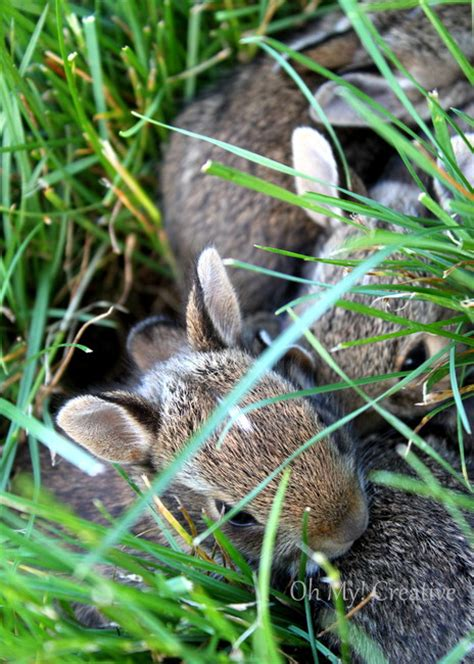 baby bunnies in my backyard photo friday 3 baby bunnies oh my creative