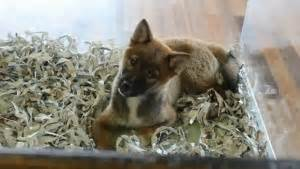 puppies for sale in st george utah the bare bones about fur de leash st george pet shop opens amid controversy st