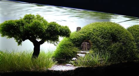 aquascape wallpaper top aquascape wallpapers weneedfun