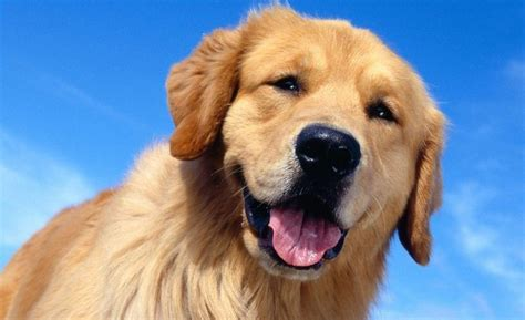 dog wallpapers wallpaper cave free dog wallpapers wallpaper cave