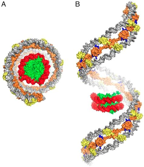 protein h ns sciblogs coiling bacterial dna