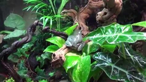 whites treefrog vivarium zoomed setup youtube