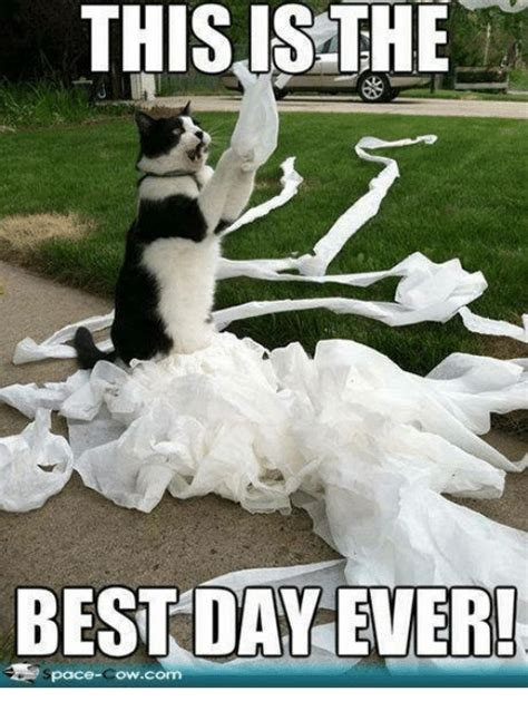 Best Day Ever Meme - 25 best memes about is the best day ever is the best