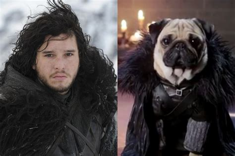 pug of thrones of thrones characters and their pug look alikes beyond the zimbio