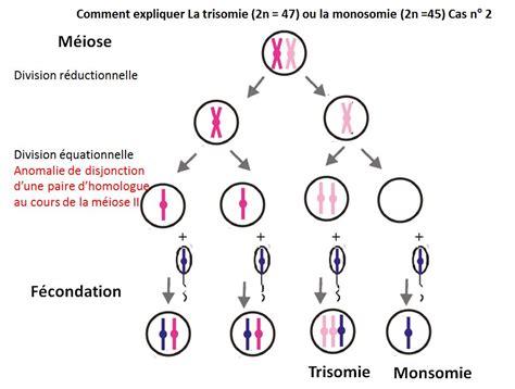 chromosome y supplementaire chapitre 2 le brassage g 233 n 233 tique et sa contribution 224 la