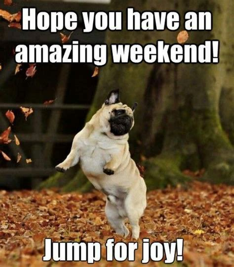Weekend Dog Meme - 76 best images about have a great weekend on pinterest