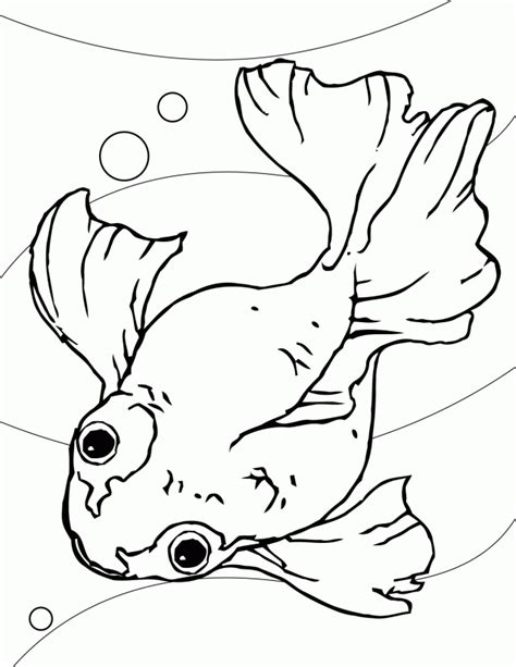 coloring pages puffer fish fish template for preschool coloring home