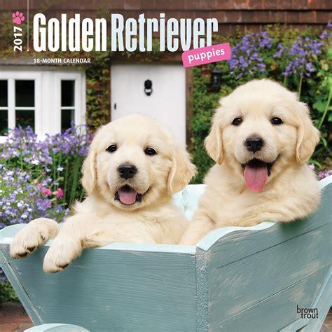 golden retriever calendar 2017 golden retriever puppies 2017 wall calendar 9781465055811 calendars
