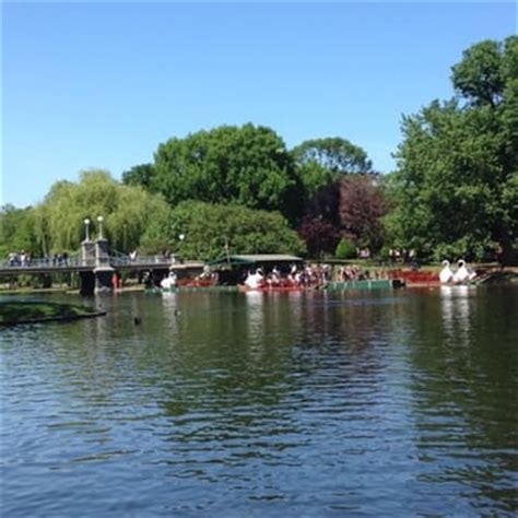swan boats boston hours swan boats of boston 126 photos 90 reviews tours