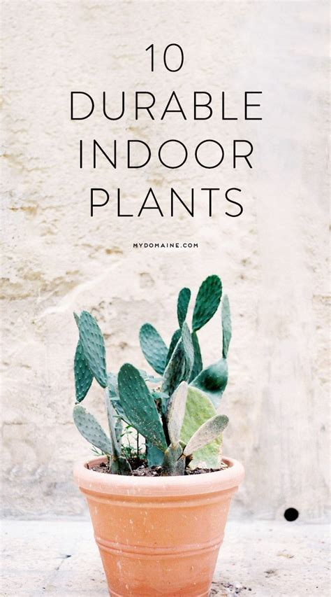 low light indoor plants in pretty easy to grow houseplants best low maintenance houseplants awesome nice exciting