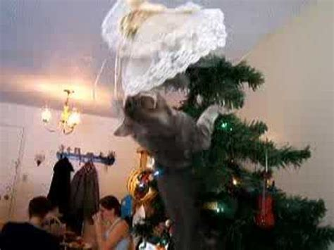 kitten climbs christmas tree to attack angel youtube