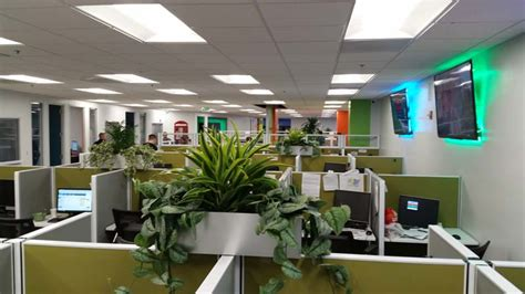 cubicle plants call center interior plants santa ana ca plantopia