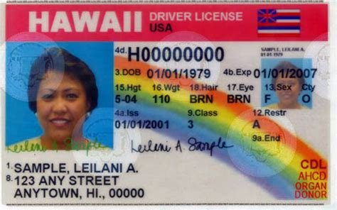 Identification Card Ellie Island Template by Hawaii Drivers License Requirements Hawaii News And