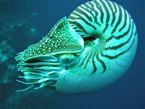 los animales marinos marine poblaciones de animales marinos se han reducido a la mitad desde 1970