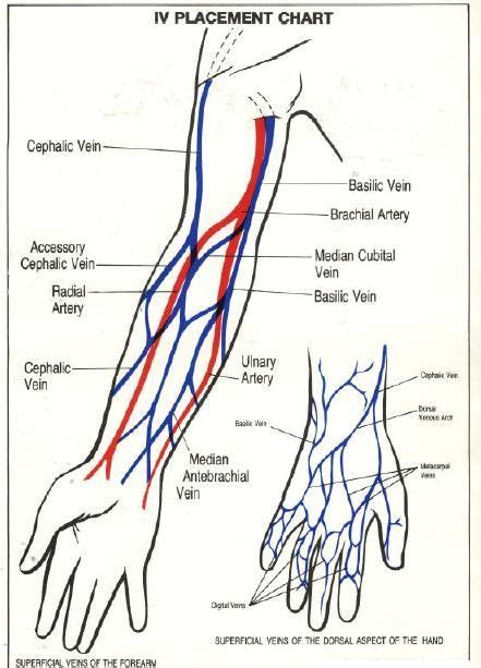 vein diagram of arm iv placement chart blood vessels of the arm and