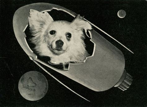 A Spacedogs Tale that time soviet russia sent dogs into space