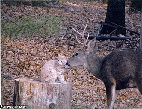 funny deer pictures  funny world