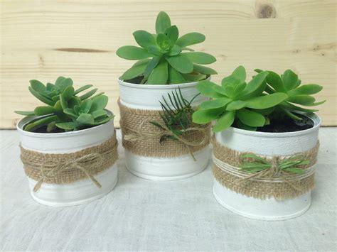 vasi per piante grasse vasetti piante grasse bomboniere tj88 187 regardsdefemmes
