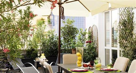 piante alte da terrazzo piante alte da balcone quali scegliere benessere