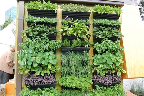 Vertical Garden Plants List Cool Green Stuff With Splashes Of Colour What S Next On