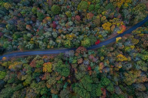 aerial view tree forest  woodland hd  wallpaper