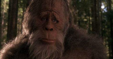 best bigfoot best pictures of bigfoot real photos of sasquatch
