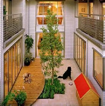 dog friendly houses dog friendly home designs