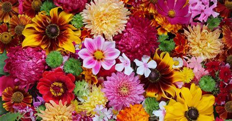 how do flowers get their color where do flowers get their colours floraqueen