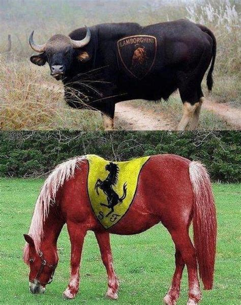 ferrari horse vs mustang horse 16 funny bull pictures and photos
