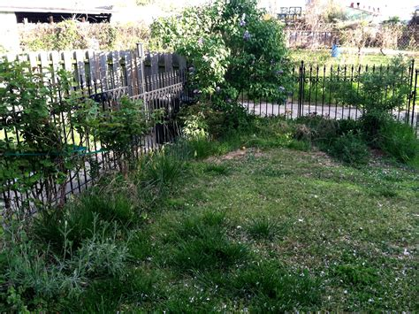 overgrown garden three steps to prepare your overgrown yard for landscaping