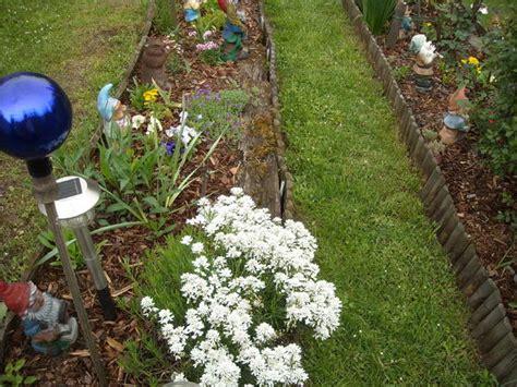 Garten Ostseite Pflanzen suche pflegeleichte pflanzen f 252 r ostseite mein sch 246 ner