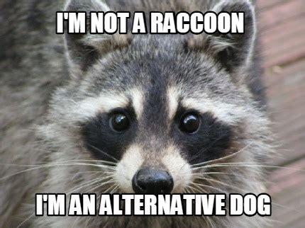 Meme Generator Raccoon - meme maker happy birthdayyyy cookie