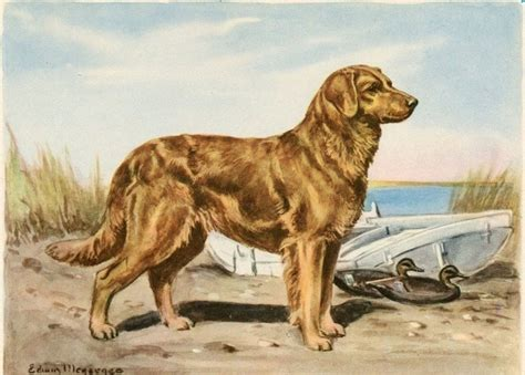 golden retriever edwin megargee painting