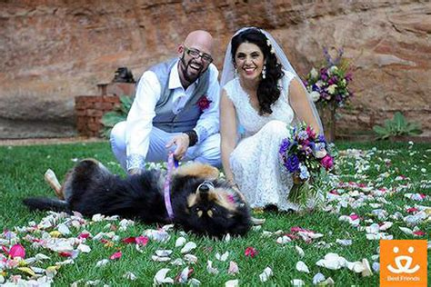 best friends animal sanctuary 6 places you never knew you could get married new york post
