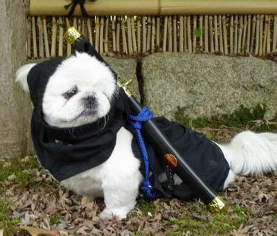 anjing di jepang ternyata ada pena dunia