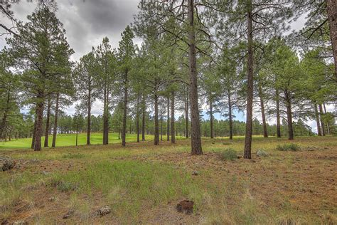 2 5 acre treed flagstaff lot with a 2 car garage workshop 44 acre heavily treed flagstaff ranch lot overlooking