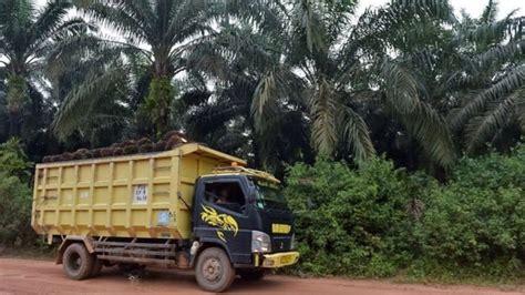 Minyak Kelapa Di Supermarket pertama supermarket inggris larang produk minyak kelapa sawit