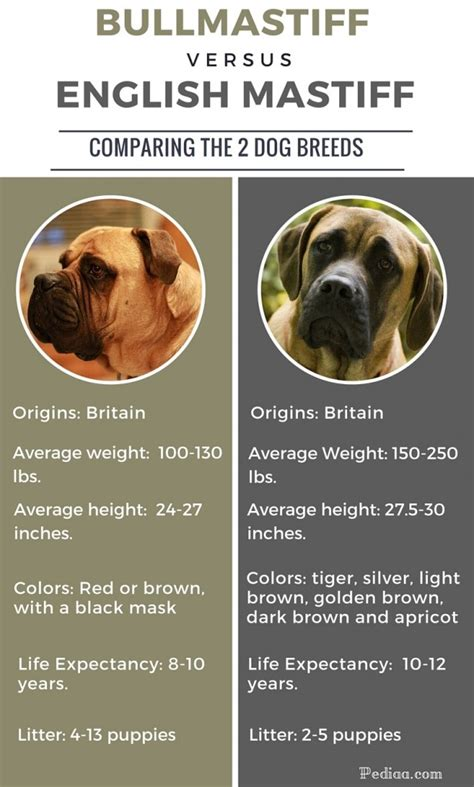 difference between pug and bulldog difference between bullmastiff and mastiff