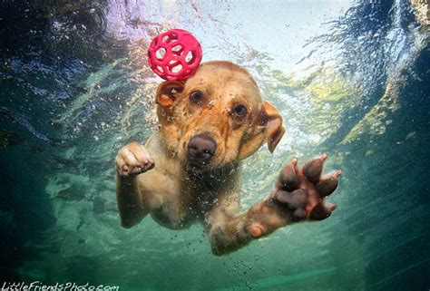dogs underwater dogs catching water by seth casteel