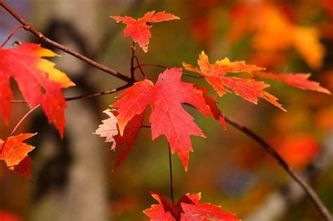 how do leaves change color how why do leaves change color mental floss