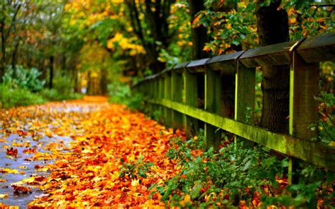 free backgrounds widescreen wallpapers download free pictures free laptop autumn photography hd wallpapers widescreen