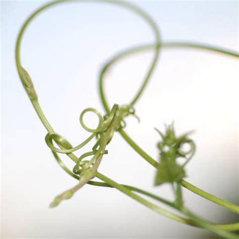 pflanze große blätter pixwords das bild mit blatt bl 195 164 tter pflanze pflanzen