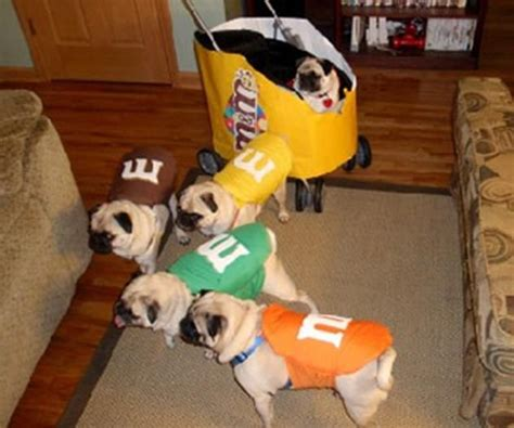 pug costumes for dogs best 25 pug pictures ideas on pug dogs pugs and pugs