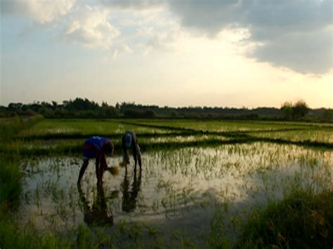 Reporters Notebook Sektor Bata by Reporter S Notebook Natuklasan Ang Sistema Ng Korapsiyon Sa Agrikultura Affairs