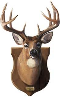 Real Deer Head Wall Mount Gallery For Gt Mounted Deer Head