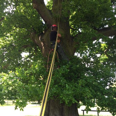 environmentally friendly trees greenwood tree care environmentally friendly tree surgery