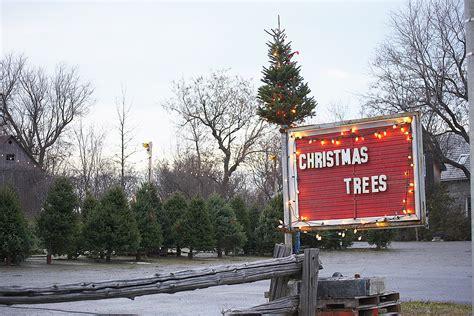 christmas tree farm central il how to the illinois tree illinois farm bureau partners