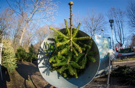 was kostet ein weihnachtsbaum 28 images best 28