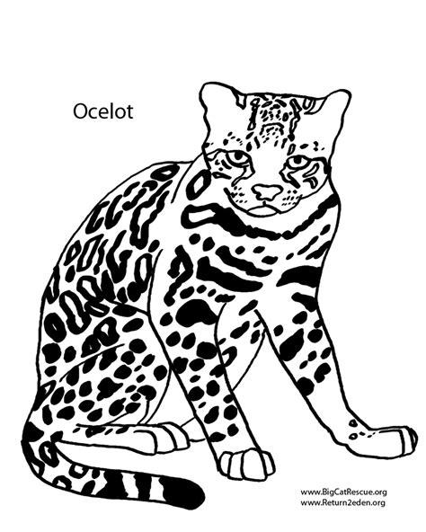 ocelot clip art 17 122 ocelot clipart clipart fans